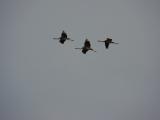 drei Vögel auf dem Weg nach Süden